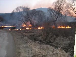 oheň - vypaľovanie trávy (HaZZ BB)
