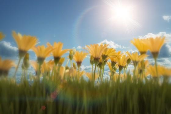 kvety-alergia