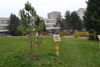 Otvorenie Maly les vo velkom meste, Foncorda, Banská Bystrica, 19.11.2013
