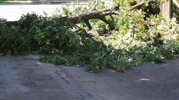 vylomený zlomený strom ilu