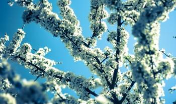 kvitnuce kvety pel