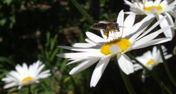 pocasie vcielka kvet foto filip rohacek