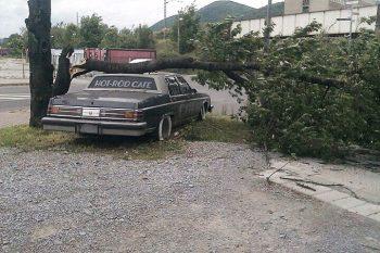 strom na aute, Banska Bystrica, 15.5.2014