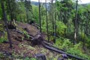 vylamany les