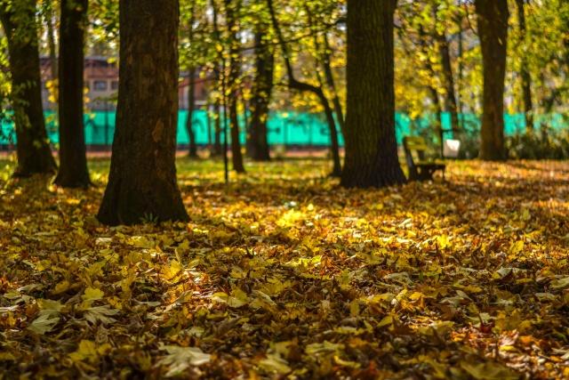 jesen bb (11)