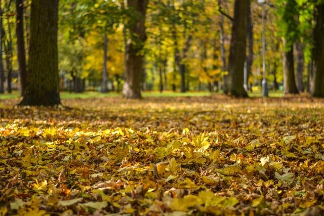 jesen bb (12)