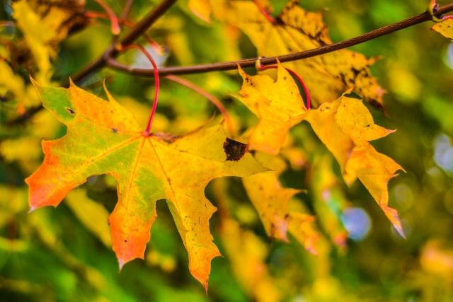 jesen bb (16)