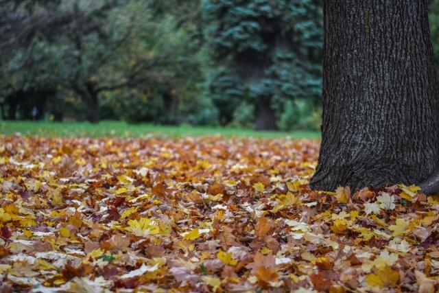 jesen bb (2)