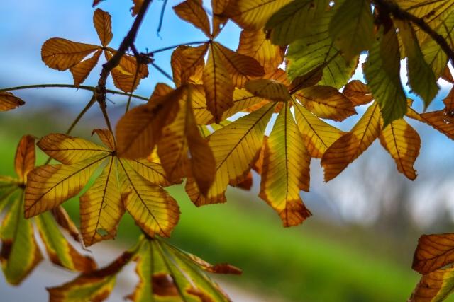 jesen bb (4)
