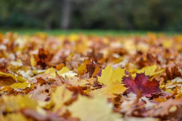 jesen bb (6)