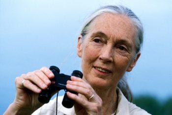 Dr. Jane Goodall_2_The Jane Goodall Institute