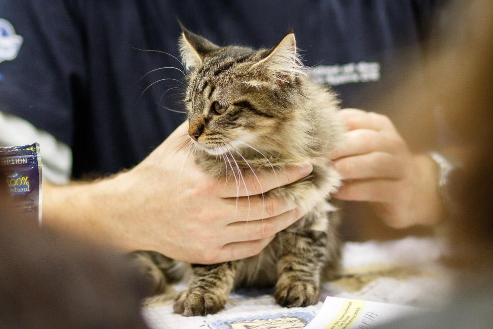 Medzinárodná výstava mačiek v Bystrici už po desiaty raz 7c396a0572c